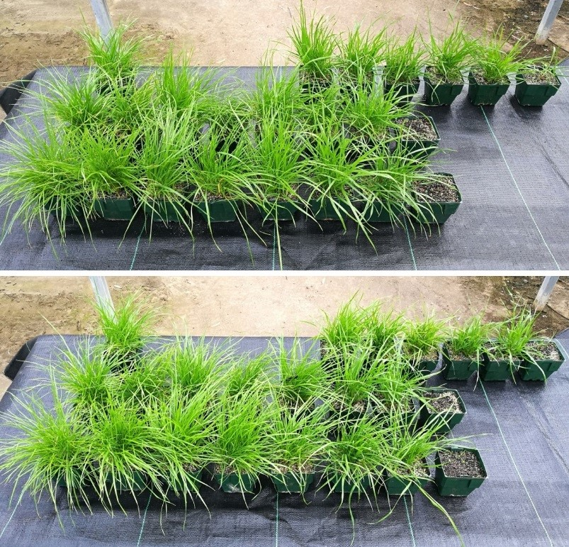 Group J herbicide dose-responses