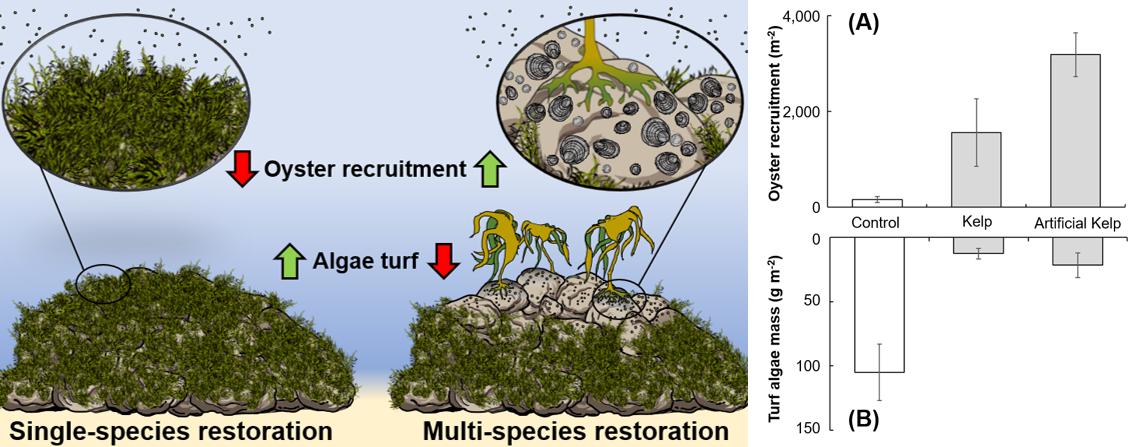 McAfee et al. 2020_Journal of Applied Ecology